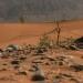 Flourish desert